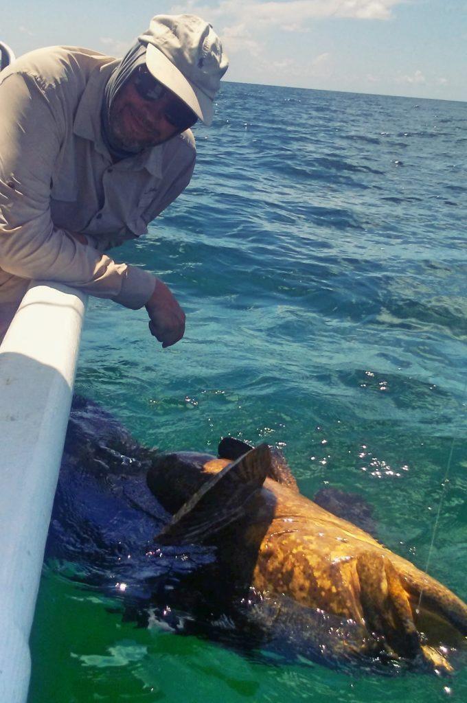 Goliath Grouper Anna Maria Island