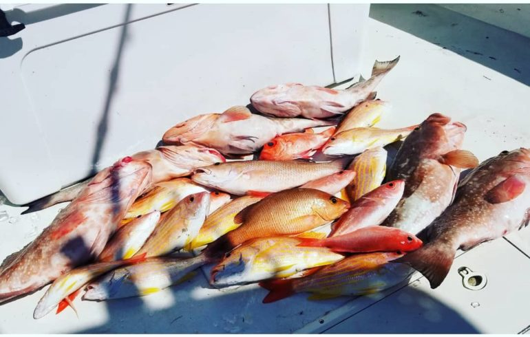 pile of fish from deep sea fishing